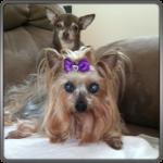Peek-a-Boo & Cooper